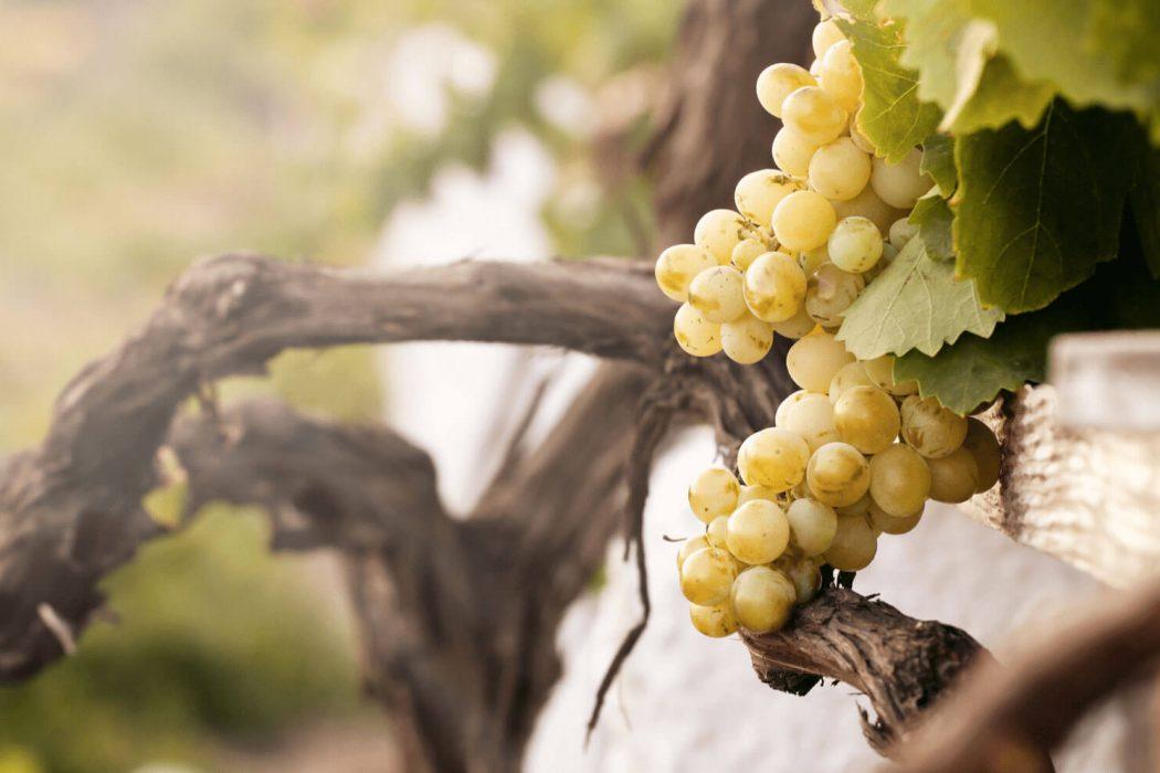 Santorini_Winery